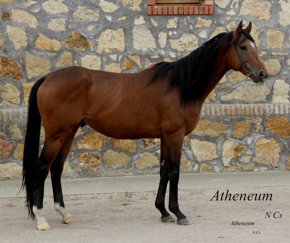 Atheneum (IRE)