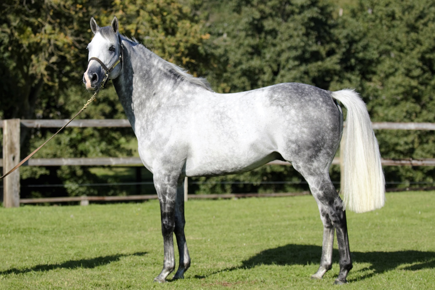 Silver Frost (IRE)